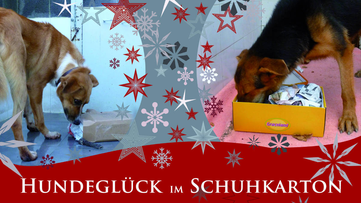 weihnachtsaktion hundegl ck im schuhkarton qimmiq lodge. Black Bedroom Furniture Sets. Home Design Ideas